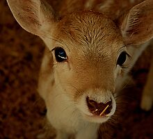 Bambi by EblePhilippe