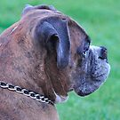 Profile of Tyson by Marlene Piccolin