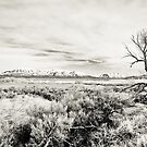 Trees in Wide Perspective by Kory Trapane