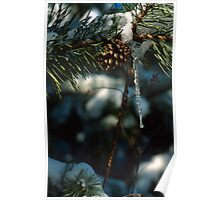 Pine Cone Icicle Poster