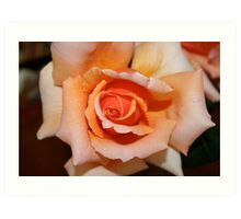 One of my roses Art Print