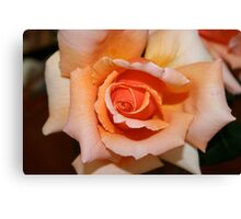 One of my roses Canvas Print