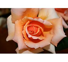 One of my roses Photographic Print