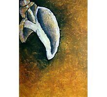 Sea shell Photographic Print