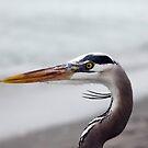 Heron by Leslie Guinan