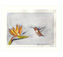 hummingbird and bird of paradise Art Print
