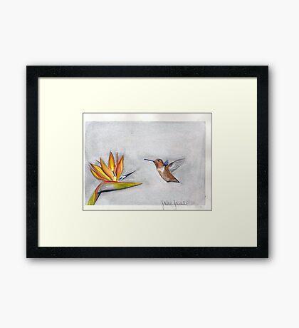 hummingbird and bird of paradise Framed Print