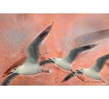 Wings Float © Vicki Ferrari Photography Photographic Print