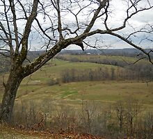 Natchez Trace Tree Near Nashville, Tennessee by Jimmie Roberson
