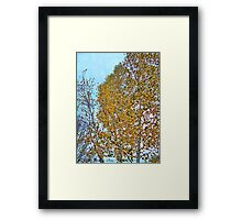 Birch Bounty Framed Print