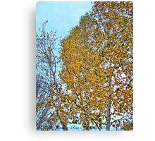 Birch Bounty Canvas Print