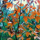 Tiny Tree by Sandra Hopko
