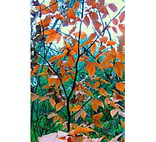 Tiny Tree Photographic Print