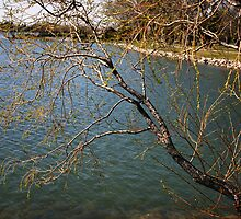 Willows Over the Lake by Alyce Taylor