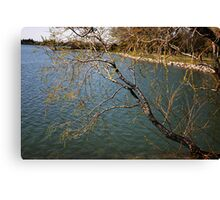 Willows Over the Lake Canvas Print