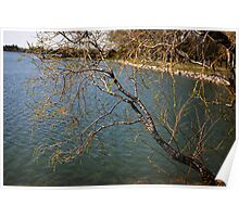 Willows Over the Lake Poster