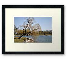 Willow at the Shore Framed Print