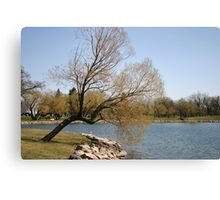 Willow at the Shore Canvas Print