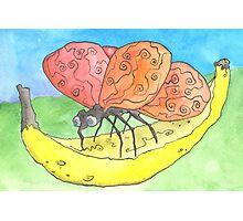 Bananafly Photographic Print