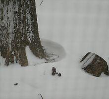 Snowed in by Scraylan