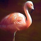 Flamingo dream by shalisa