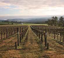 Vineyard - Yarra Valley by Timo Balk