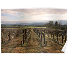 Vineyard - Yarra Valley Poster
