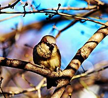 Sparrow in Central Park by Funmilayo Nyree