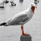 Screaming Gull by Christopher Meder