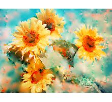Sunflowers SUPPORT JAPAN EARTHQUAKE AND TSUNAMI RELIEF Photographic Print