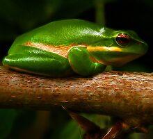 Fractalius Frog by John Morton