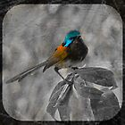 Red Winged Wren  by pennyswork