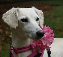 Pretty In Pink by Sally J Hunter