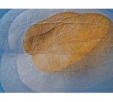 Dead leaf as light as air Photographic Print
