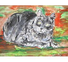 Smalls (My Cat) Photographic Print