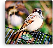 Sparrow Watches Canvas Print