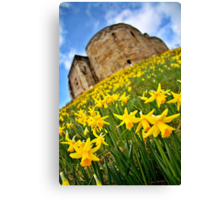 Early Daffodils In York Canvas Print
