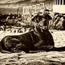 En la playa by Constanza Caiceo