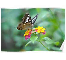 fluttering beauty Poster