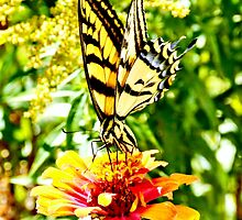 Yellow Butterfly by Amy McDaniel