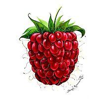 Raspberry Photographic Print