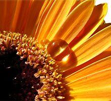 ~ Sunny Side Up ~ by Brenda Boisvert