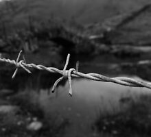 Barbed contrast by weirdgecko