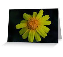 Chrysanthemum coronarium Greeting Card