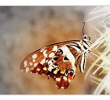 Vlindervlerkies by Rina Greeff