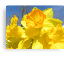 Delight Of The Daffodils Canvas Print