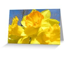 Delight Of The Daffodils Greeting Card