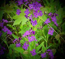 Purple Essence - Wild Flowers by Nora Caswell