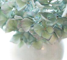 Hydrangea by Ellen van Deelen