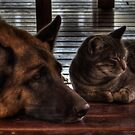 Best of Friends - HDR by Margo Naude